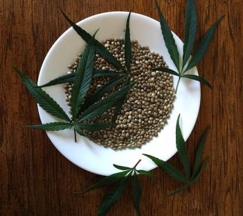 semillas-de-cacc81ncc83amo.jpg