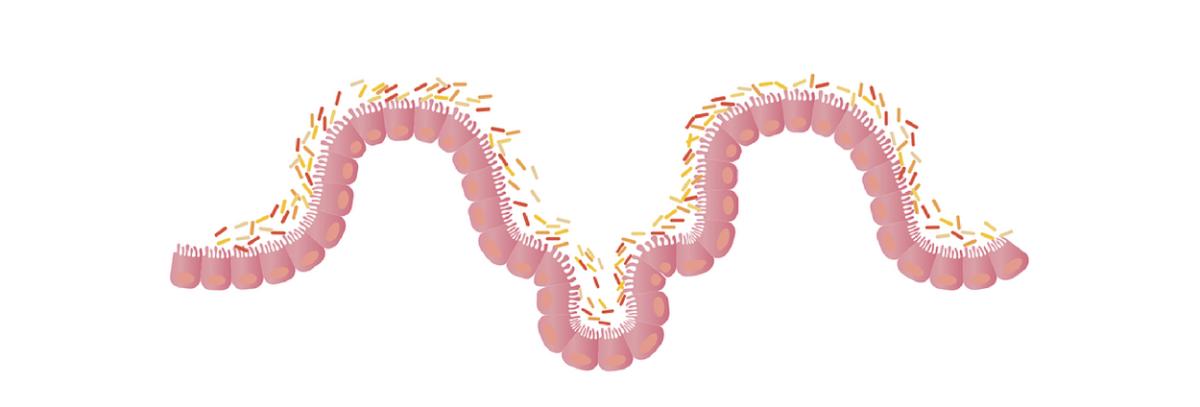 Probióticos y Prebióticos, ¿qué son y qué beneficios tienen para la salud?